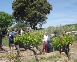 Domaine de l'Aqueduc - Saint-Maximin - Visite de vignes